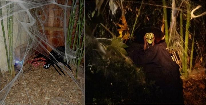 halloween-spider-witch-collage